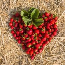 Benedek Gyümölcsfarm fotózás (7)