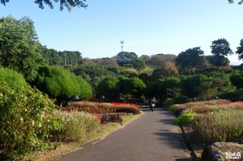 Nokonoshima Island Park, Fukuoka