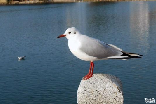 Le lac du parc Ôhori, Fukuoka
