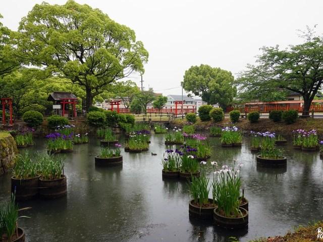 Saison des pluies au sanctuaire Kashii-gû