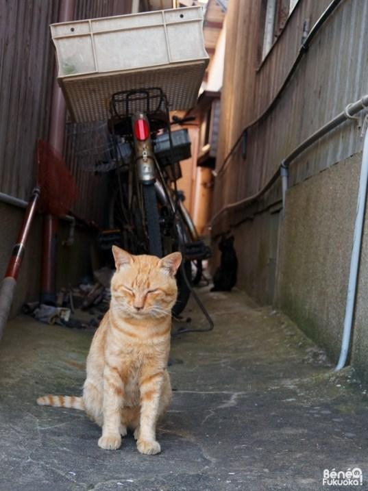 Chat à Ainoshima, Fukuoka