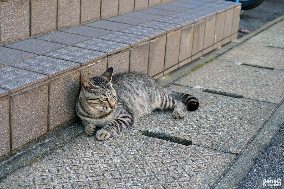 Ainoshima, l' île aux chats de Fukuoka