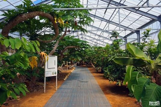 Utopia Farm, Miyakojima