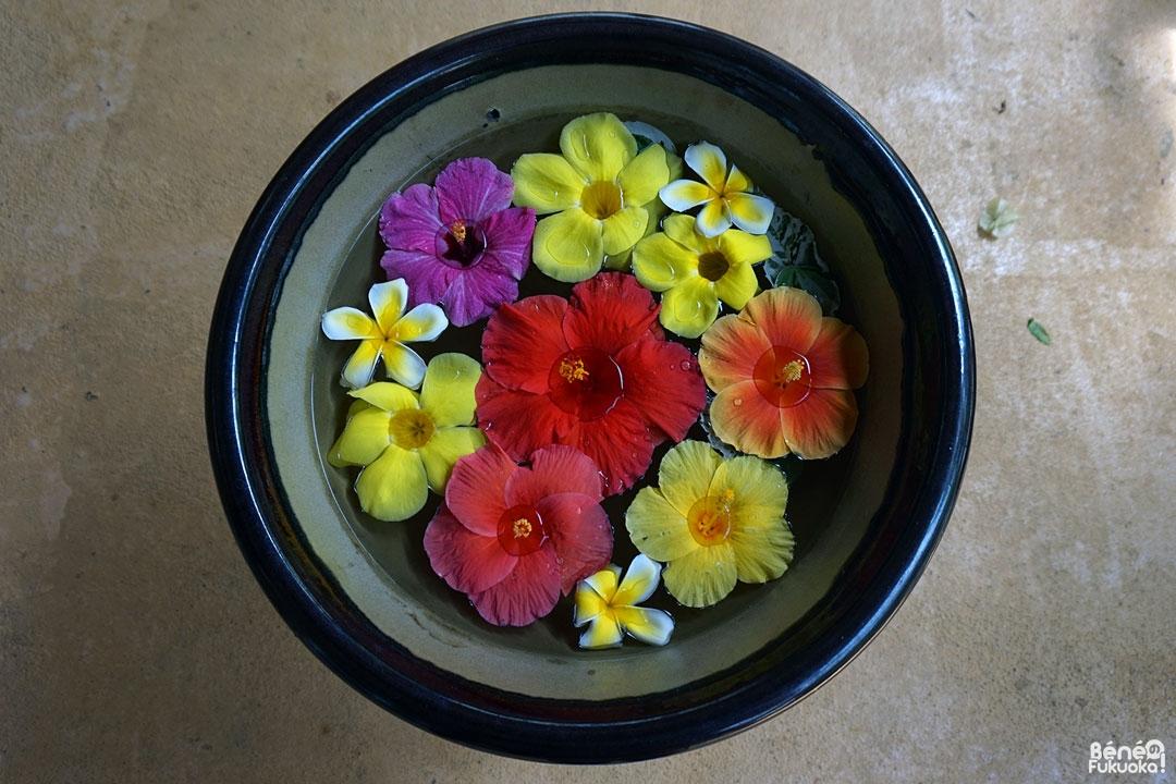 Vasque d'hibiscus, Utopia Farm, Miyakojima
