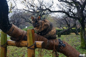 Chat au parc Maizuru, Fukuoka