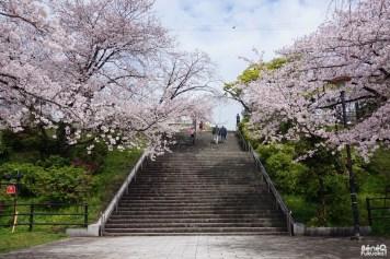 Cerisiers au parc Nishi de Fukuoka