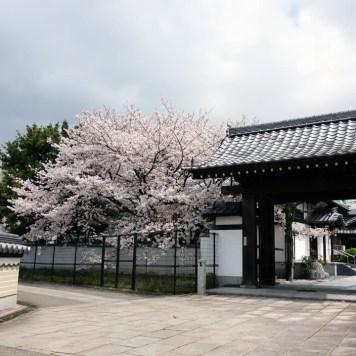 Temple Sesshin-in, Fukuoka