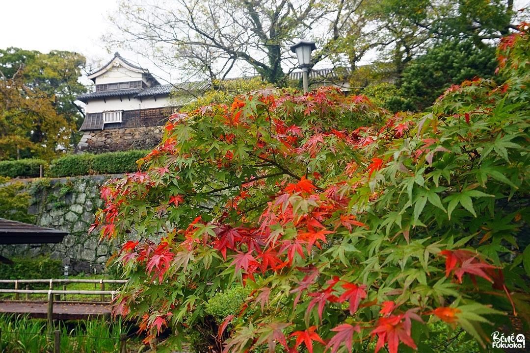 Érables au parc Maizuru de Fukuoka