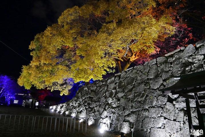 Momiji illuminés au parc Maizuru de Fukuoka