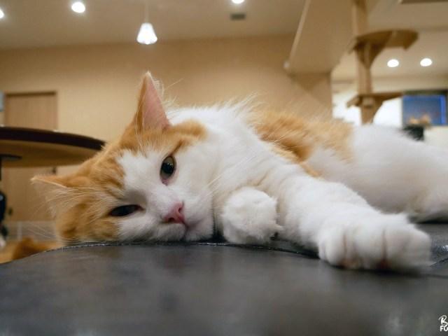 Cat Cafe OBC, un adorable café à chats à Fukuoka