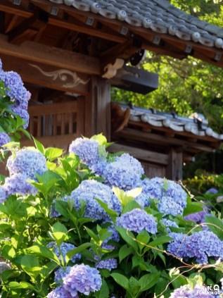 Dainichi-ji, temple des hortensias à Itoshima, Fukuoka