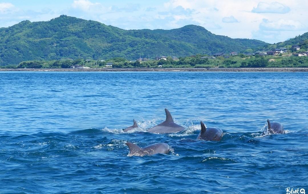 [Amakusa] Croisière à la rencontre des dauphins