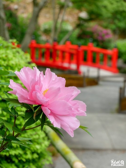 Jardin japonais du sanctuaire Yûtoku Inari, préfecture de Saga