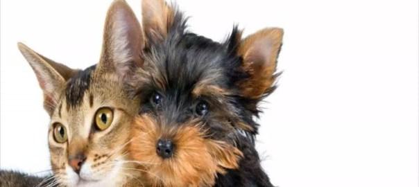Aloe Vera per la cura di cistite e infezioni urinarie di cani e gatti
