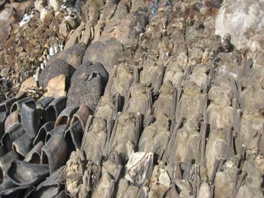 cotonou fetsi market, photo of animal significant for voodoo