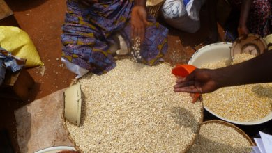 Photo of Production céréalière: Le Bénin atteint près de deux millions de tonnes en 2018
