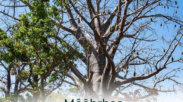 destination-benin-:-ouake,-cite-des-baobabs,-terre-des-vainqueurs,-reputee-pour-la-«-kamou-»,-fete-de-la-chicotte