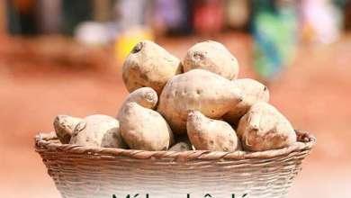 Photo of Destination Benin : Bonou, mine touristique et cultuelle en pays wémè, au cœur de l'univers des forêts et des singes à ventre roux