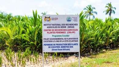 Photo of Aménagement de la zone balnéaire : Les pépinières de production de plants de cocotiers à Sèmè-Podji accueillent les ministres DOSSSOUHOUI et TONATO