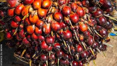 Photo of Production d'oléagineux au Bénin : Le gouvernement pour sauver l'huilerie CODA-BENIN S.A et les emplois