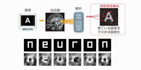 Scientists extract images directly from brain