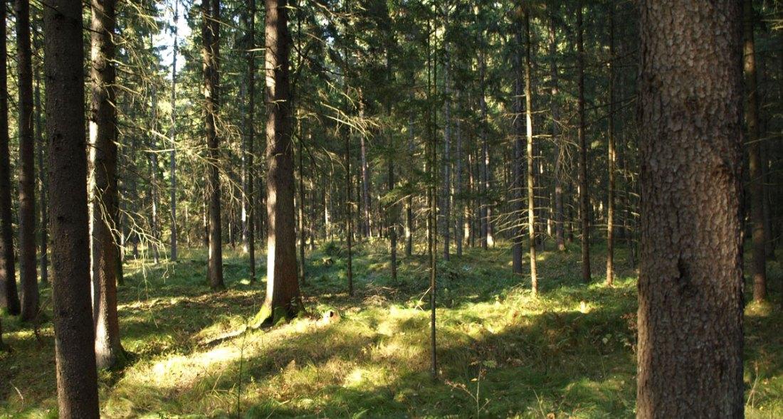 wood-weed