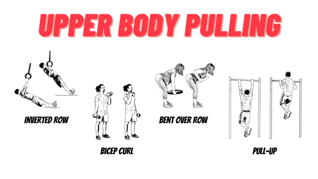 Upper body pulling examples