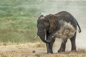 ABH-Benny-Rebel-Fotoreise-Tansania-Elefant