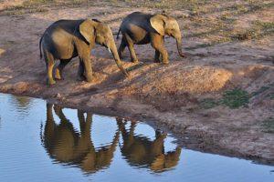 ABZ-Benny-Rebel-Fotoreise-Suedafrika-Elefant