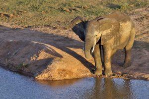 ACA-Benny-Rebel-Fotoreise-Suedafrika-Elefant