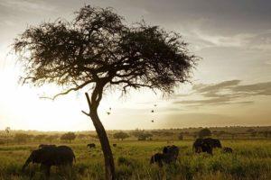 ADA-Benny-Rebel-Fotoreise-Tansania-Elefant