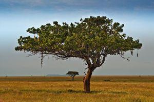 ADV-Benny-Rebel-Fotoreise-Serengeti-Tansania-208