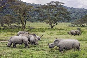 AIz-Benny-Rebel-Fotoreise-Kenia-Nashorn-Breitmaul