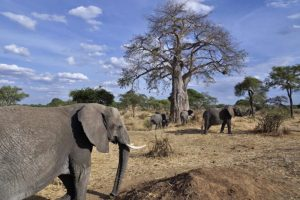 AJl-Benny-Rebel-Fotoreise-Tansania-Elefant