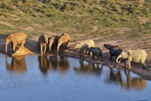 AJw-Benny-Rebel-Fotoreise-Namibia-Elefant