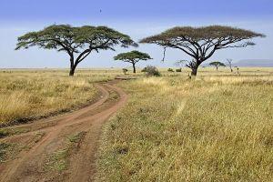 AKdBenny-Rebel-Fotoreise-Tansania