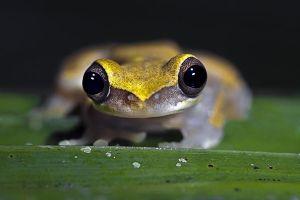 AMa-Benny-Rebel-Fotoreise-Frosch-Costa-Rica