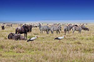 AOh-Benny-Rebel-Fotoreise-Tierherde-Serengeti-Tansania