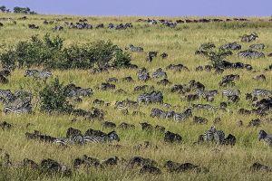 AOj-Benny-Rebel-Fotoreise-Kenia-Migration