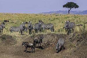AOl-Benny-Rebel-Fotoreise-Kenia-Migration