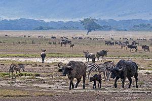 AOu-Benny-Rebel-Fotoreise-Tansania-Ngorongoro