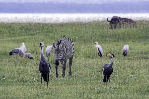 AOv-Benny-Rebel-Fotoreise-Kenia