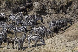 AOx-Benny-Rebel-Fotoreise-Kenia-Migration