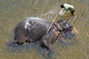 AQb-Benny-Rebel-Fotoreise-ElefantSri-Lanka
