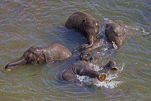 AQd-Benny-Rebel-Fotoreise-ElefantSri-Lanka
