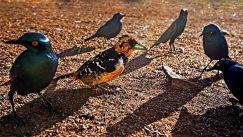 AUg-Benny-Rebel-Fotoworkshop-Suedafrika-Haubenbartvogel