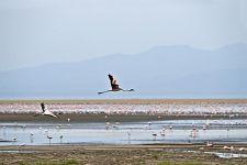 AVc-Benny-Rebel-Fotoreise-Tansania-Flamingo