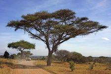 BA-Benny-Rebel-Fotoreise-Tansania-Tarangire-Tourismus