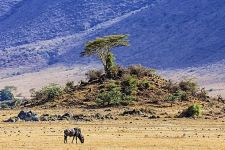 BEBenny-Rebel-Fotoreise-Tansania-Gnu