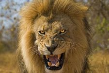 BPBenny-Rebel-Fotoreise-Suedafrika